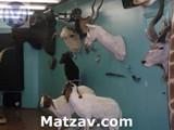 torah_zoo_-_pic_6