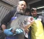 new-square-fish