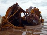 healing-seaweed-gel
