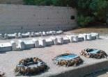graves-of-jews-in-chevron