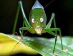 bug-frog