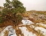 kevorim-graves