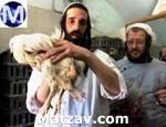 chicken-yoel-krause