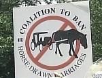 horse-nyc