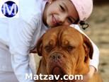dog-cancer-kid