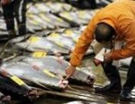 bluefin-tuna-us-radiation