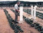 israeli-irrigation