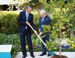 obama-peres-tree