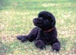 sunny-first-dog