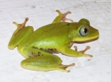 gardiners-frogs