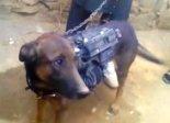nato-dog