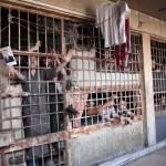syria-prisoners