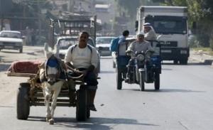 hamas-donkey