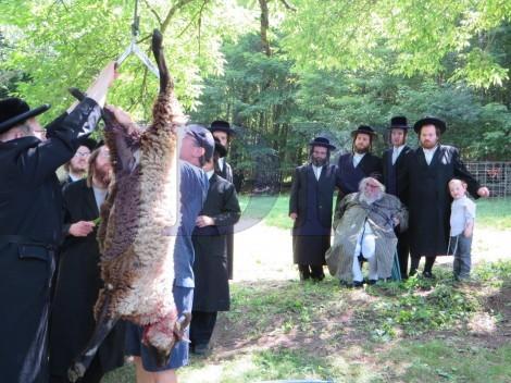 sheep-rosh-hashanah
