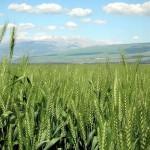 israel-farm