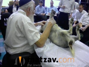 Rav Yisroel Belsky (8)