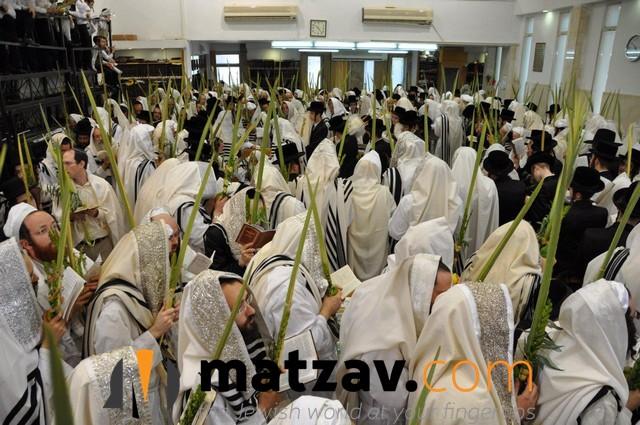 Erlauer Rebbe (11)