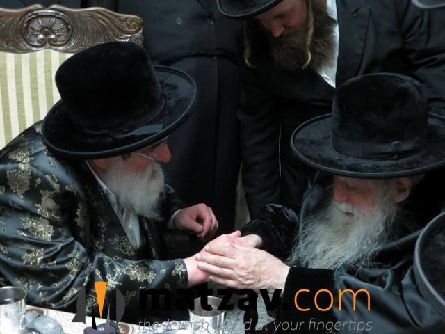 Erlauer Rebbe (249)