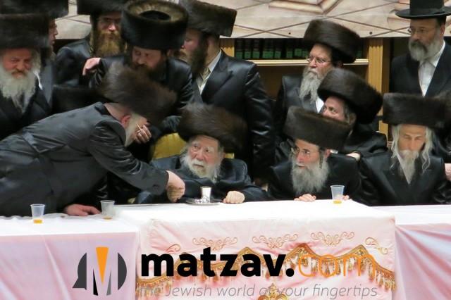 Erlauer Rebbe (291)