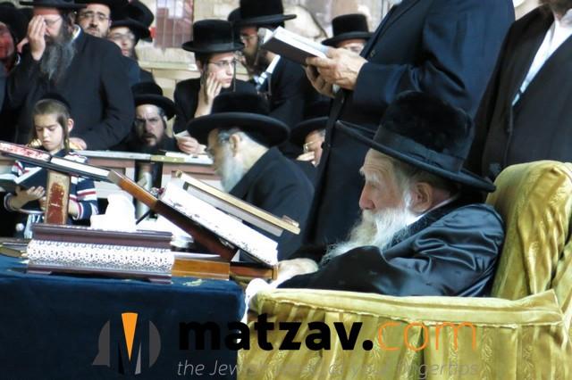 Erlauer Rebbe (319)