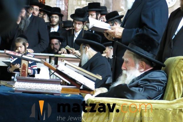 Erlauer Rebbe (320)
