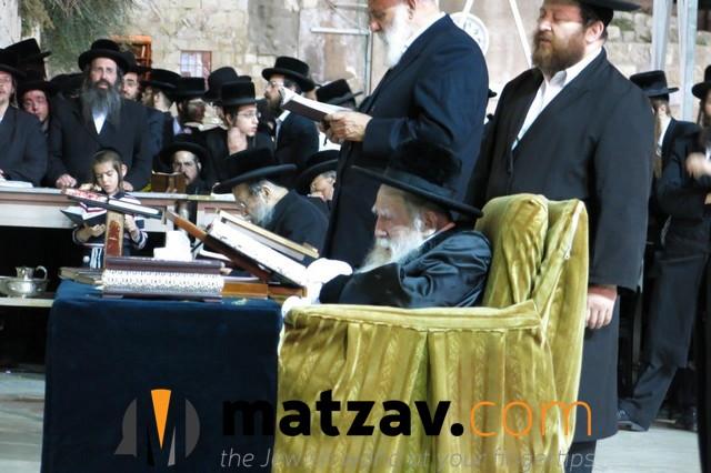 Erlauer Rebbe (322)