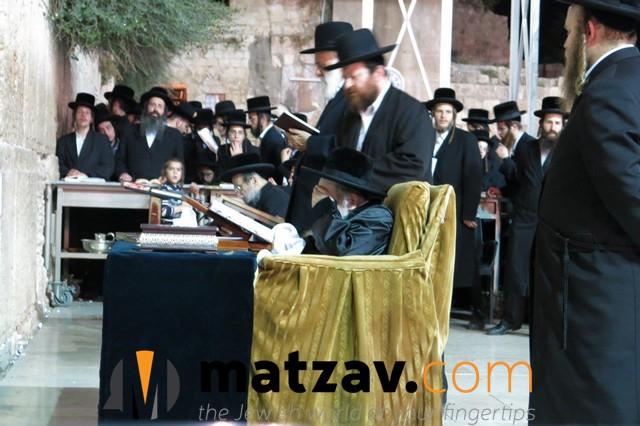 Erlauer Rebbe (325)