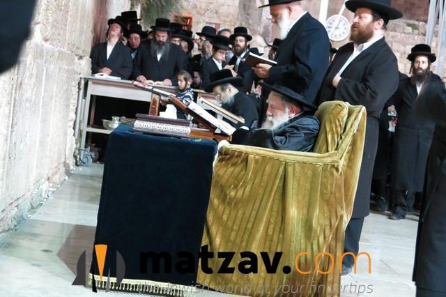 Erlauer Rebbe (328)