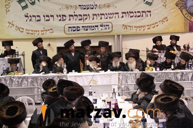 Erlauer Rebbe (331)
