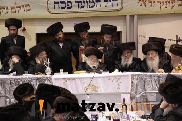 Erlauer Rebbe (332)