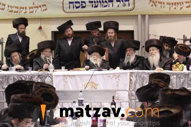 Erlauer Rebbe (335)