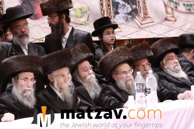 Erlauer Rebbe (375)