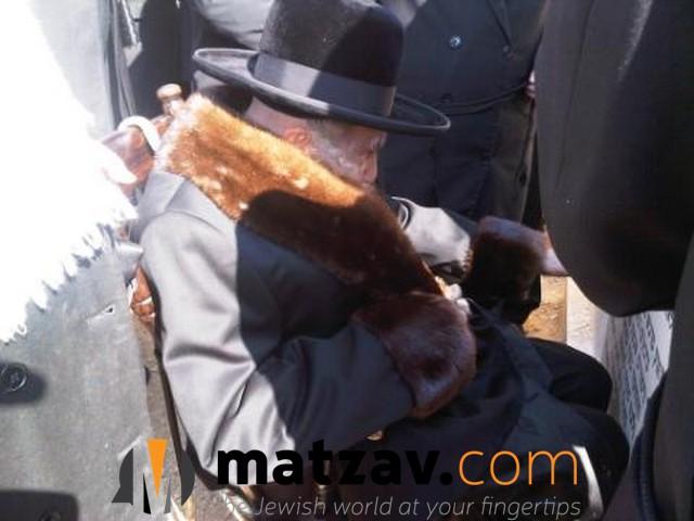 Erlauer Rebbe (387)