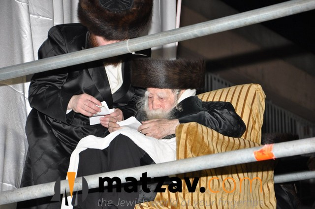 Erlauer Rebbe (429)