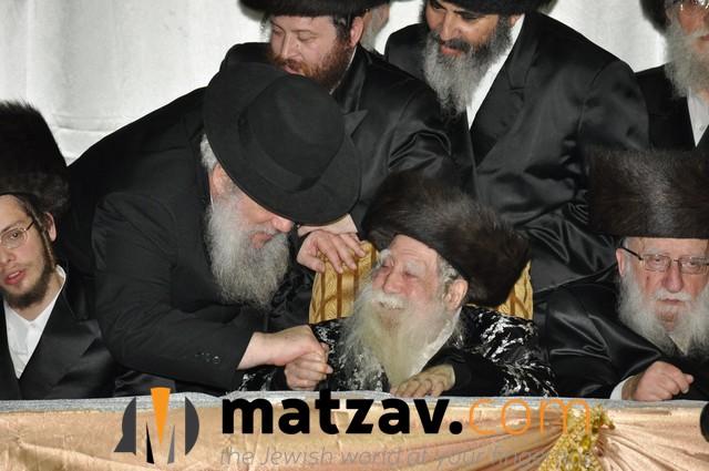 Erlauer Rebbe (445)
