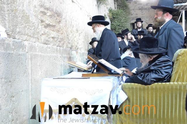 Erlauer Rebbe (455)