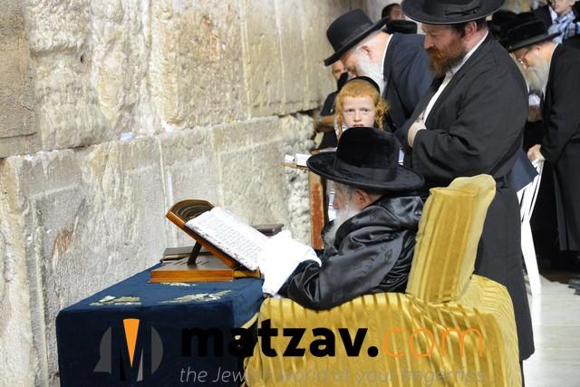 Erlauer Rebbe (477)