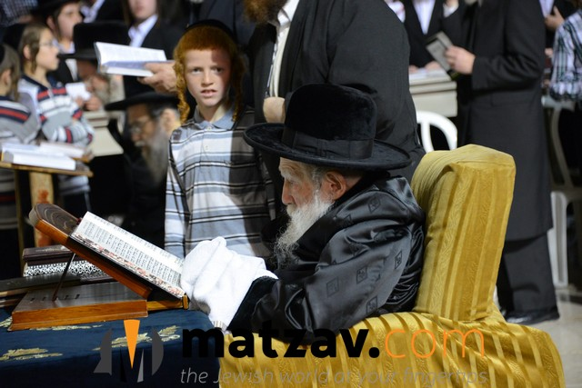 Erlauer Rebbe (478)