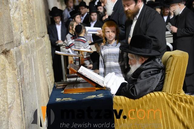 Erlauer Rebbe (479)