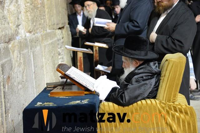 Erlauer Rebbe (480)