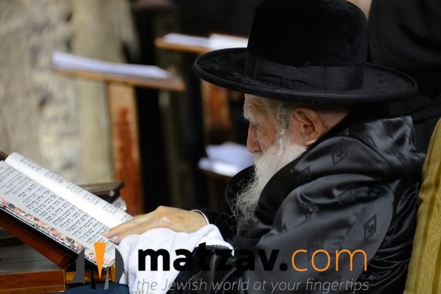 Erlauer Rebbe (481)