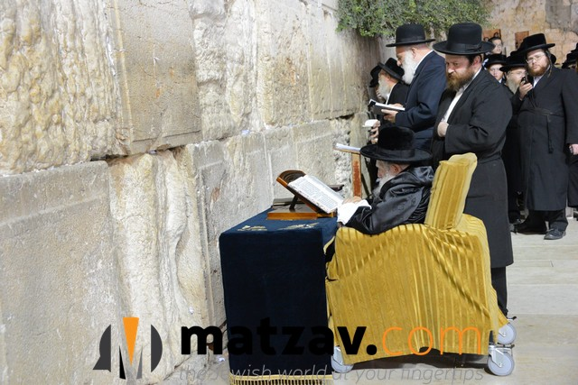Erlauer Rebbe (482)