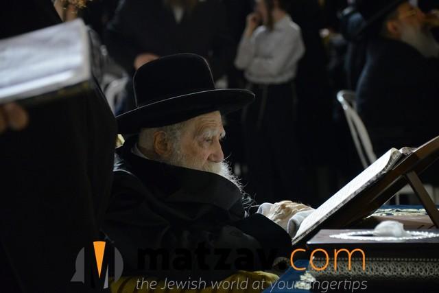 Erlauer Rebbe (483)