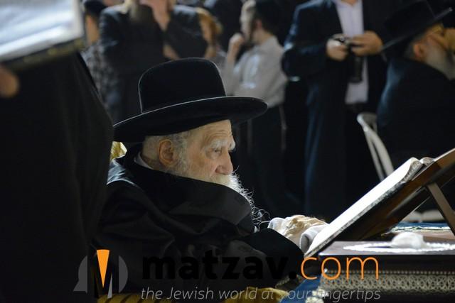 Erlauer Rebbe (484)