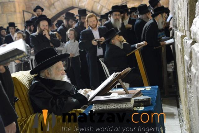 Erlauer Rebbe (486)