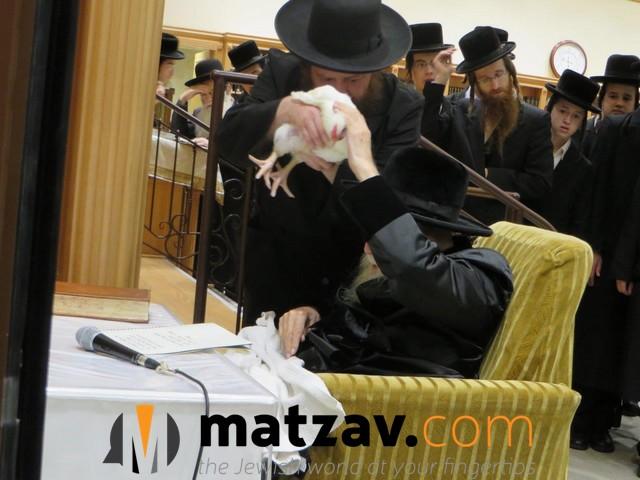 Erlauer Rebbe (63)