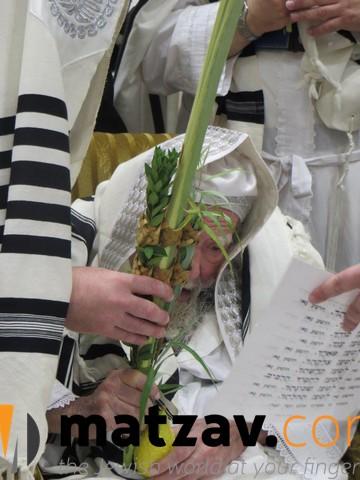 Erlauer Rebbe (79)