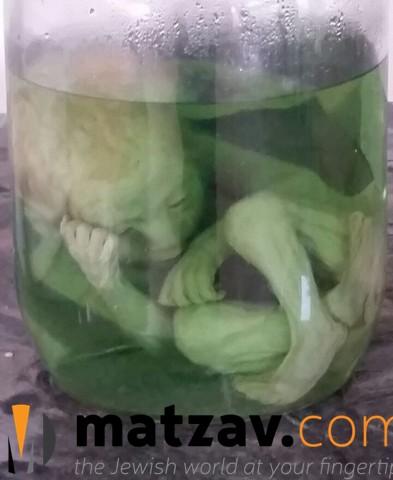 embryos (2)
