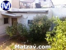 The esrog tree in Rav Michel Yehudah's yard.